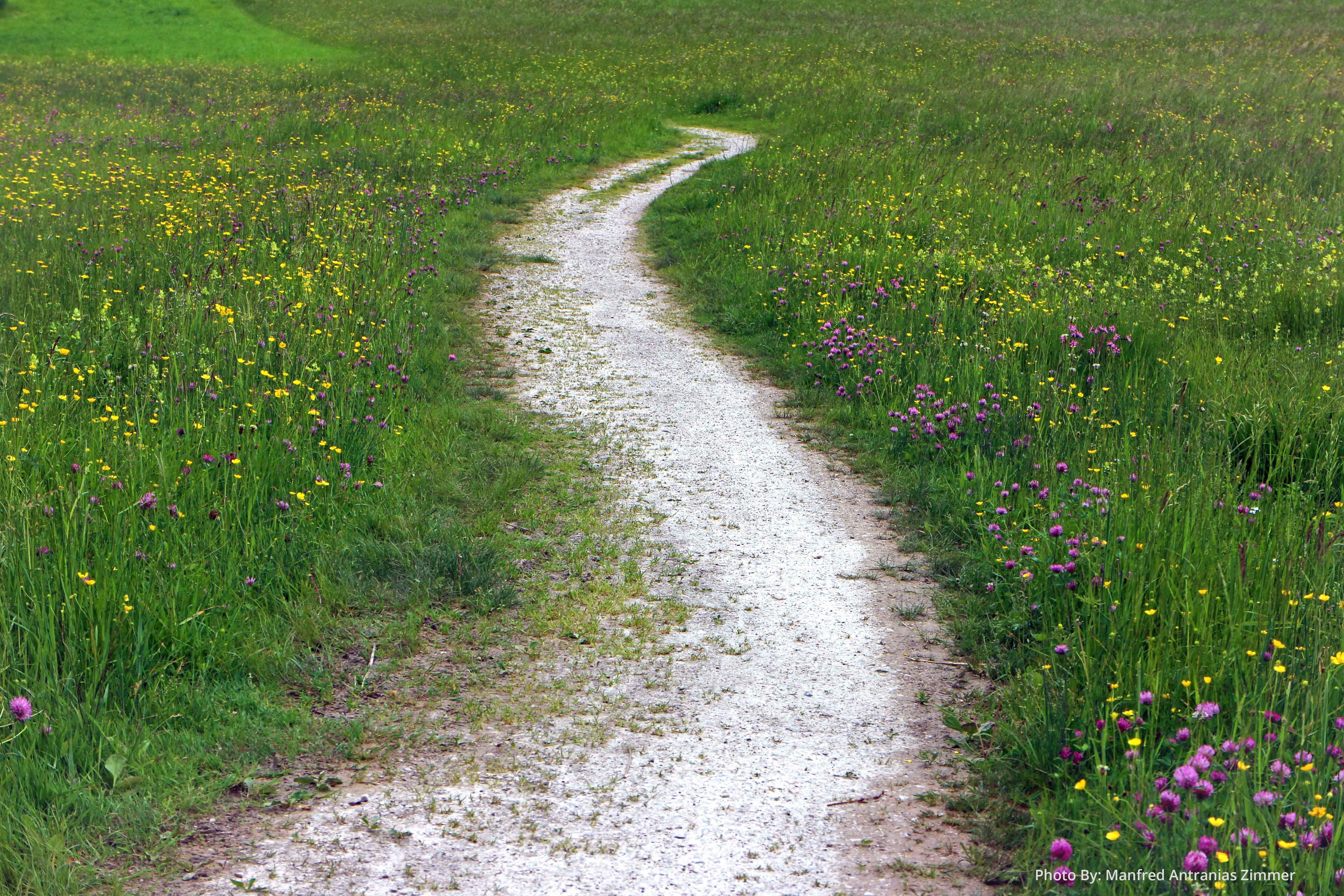 A sandy path winds through green grass and wildflowers. It looks inviting.