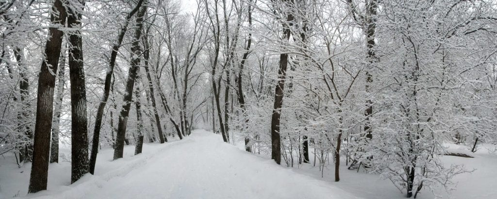 Freshly fallen snow fills a trail with several large trees and the scene feels lonely.